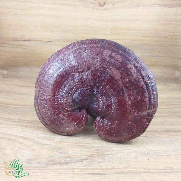 قارچ خالص گانودرما لوسیدوم قرمز اصل
